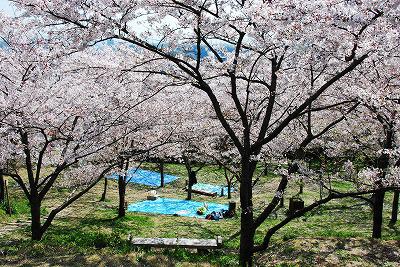 Tsukayama Park Cherry Blossom Festival