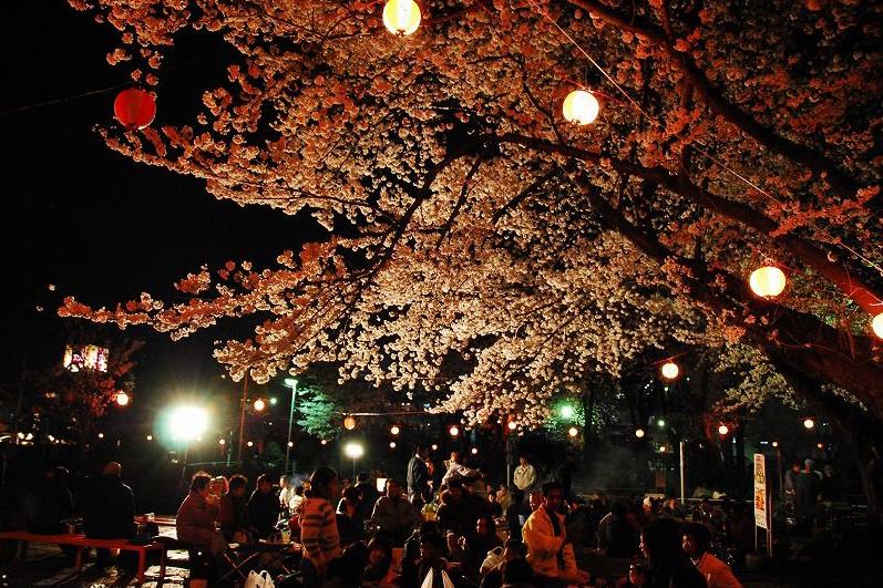 Kita-kurihama Cherry Blossom Festival