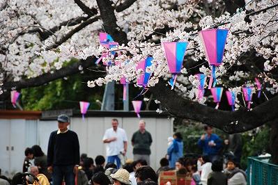 Funakoshi Nango Park Cherry Blossom Festival