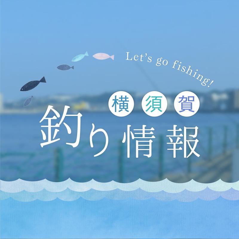 横須賀釣り情報